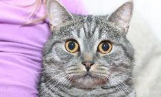 Без кота и жизнь не та: забавные усатики Тулы