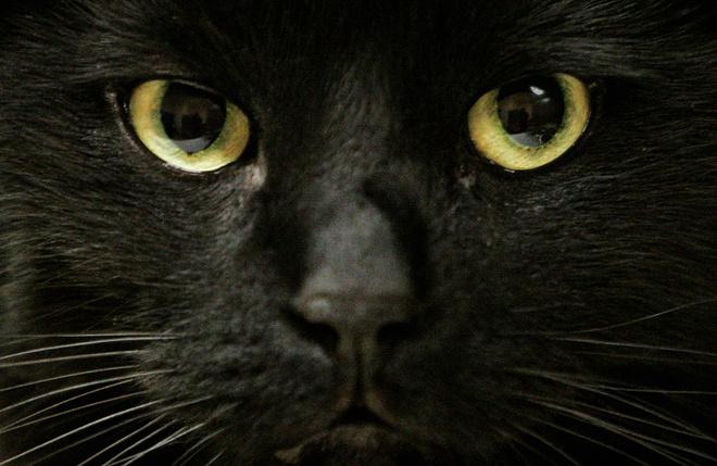 как назвать черную кошку девочку