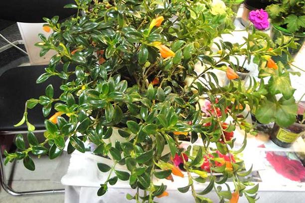 Выставка цветов в Иркутске