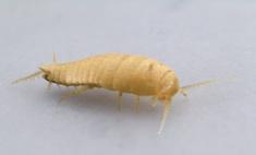 Методы избавления от маленьких насекомых в ванной и на кухне