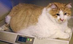 Лишний вес – проблема века!