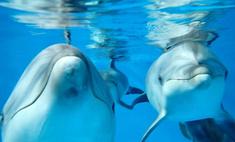Дождались! В дельфинарий прилетели морские питомцы