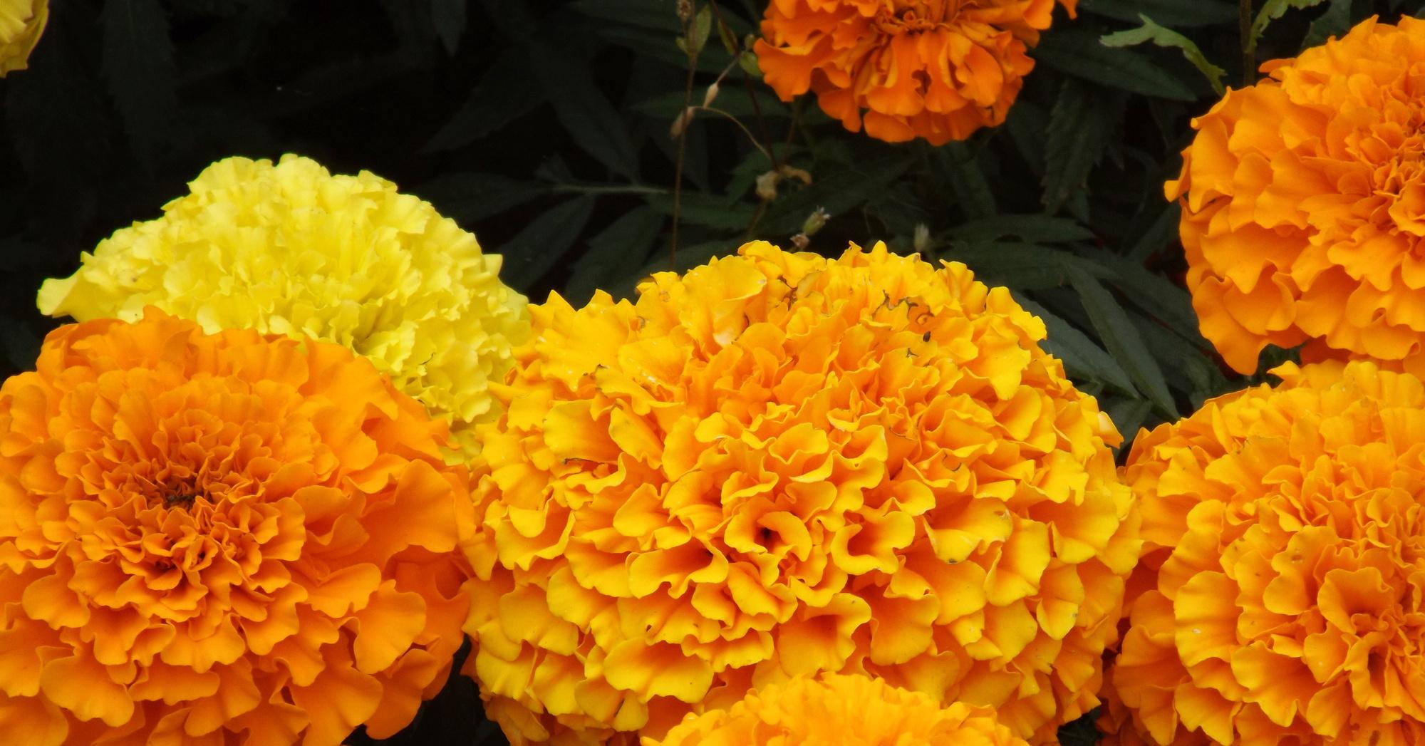 Посадка цветов под зиму - Сад и огород 13