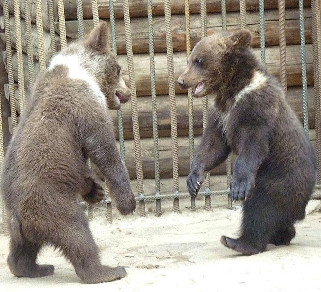 новости Омска, зоопарк, медвежата