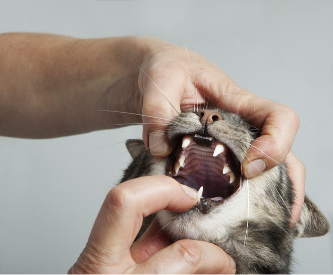 у кота текут слюни