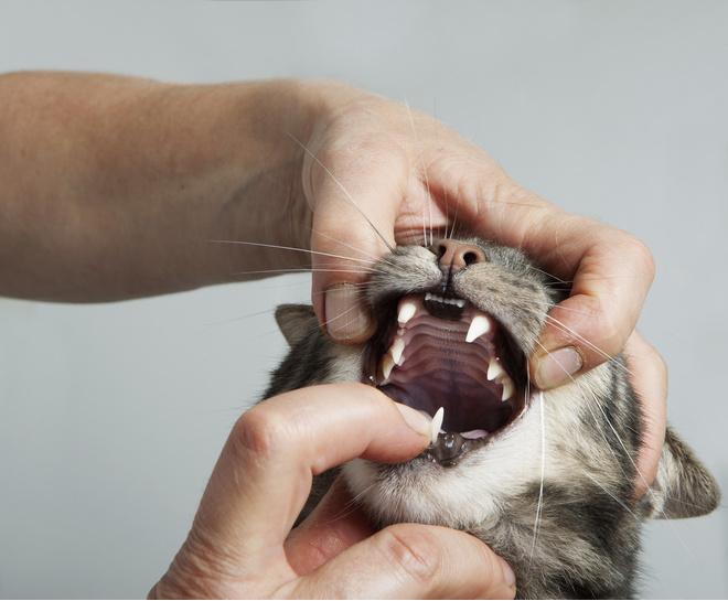 Кот тяжело дышит и текут слюни
