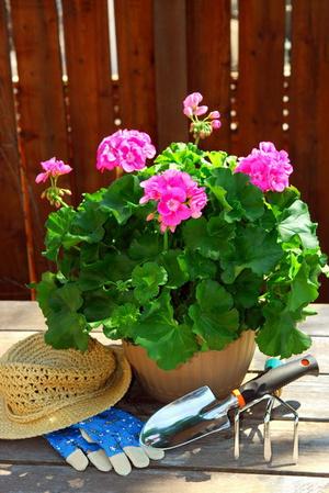 Как правильно пересаживать комнатные цветы - Woman s Day