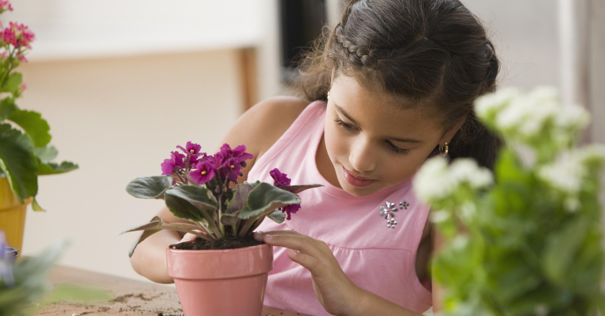 Какие цветы необходимы в доме фото