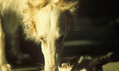 В Грузии кошка родила щенка