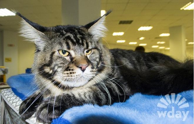 Породы кошек: фото