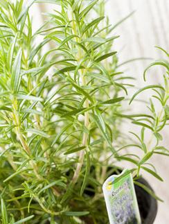 ароматы для дома, эфирные масла, парфюмерия для дома, ароматерапия, ароматические свечи, комнатные растения, розмарин, пряные травы