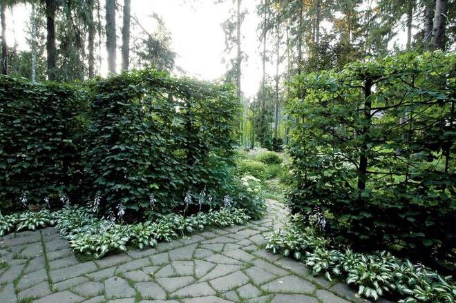 Пол «зеленой гостиной» вымощен колотым песчаником с травяным швом. Для этого щели между камнями были засыпаны землей с примесью семян тенелюбивых газонных трав.