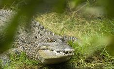 Беременная африканка спасла мужа от крокодила