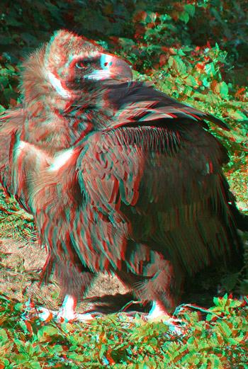 3D-фотографии можно смотреть только в специальных очках.
