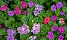 Хит сезона: «мещанские» цветы