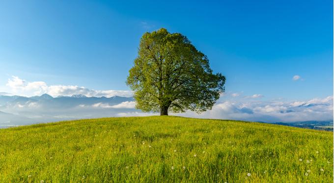 Зависимость и независимость. Как найти баланс?