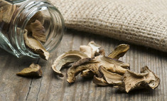 Заготовка грибов впрок: все способы