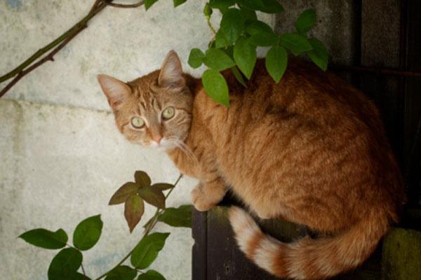 Видео смешные коты онлайн бесплатно