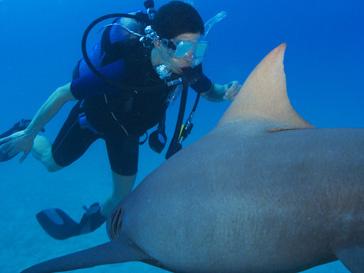При встрече с акулой нельзя паниковать