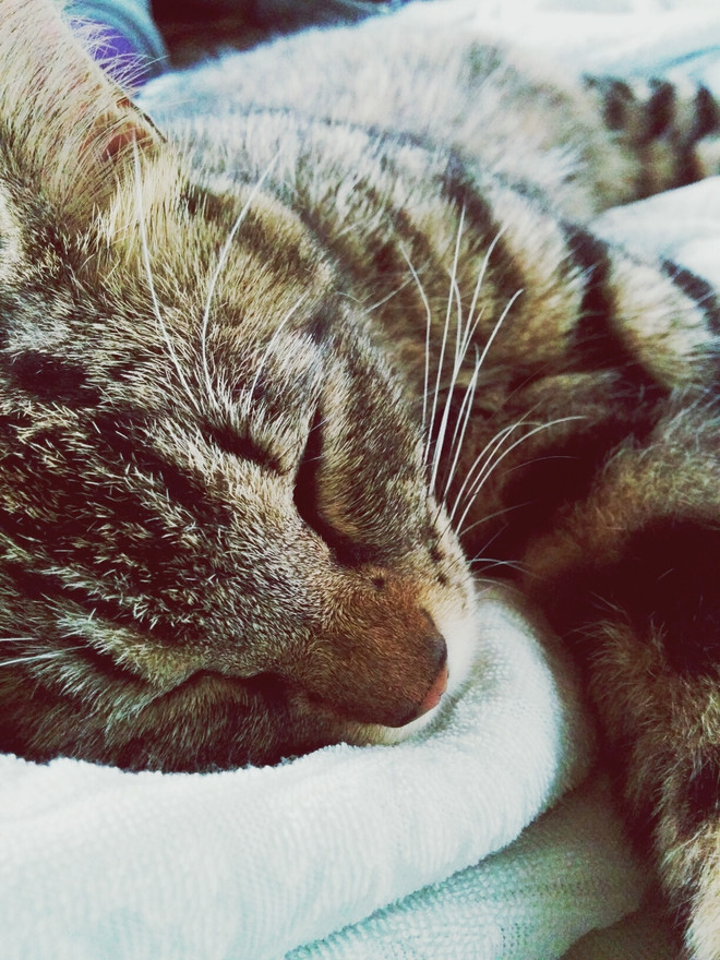 как болеют коты