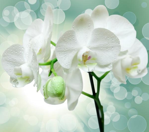 Где ставить орхидею дома