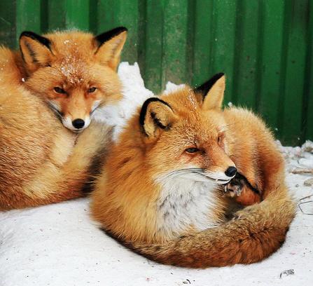 Иркутск. Зоогалерея Ивушкиных