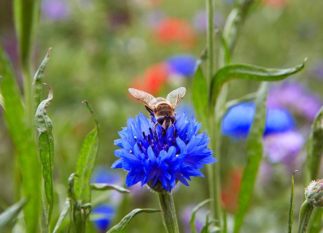 Таежный мед делается из целебных трав