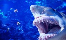 Пьяный серб случайно убил акулу