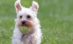 Потерявшаяся собака была найдена спустя семь лет