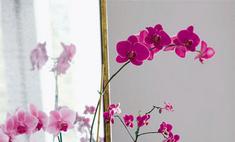 Модное сочетание: серый с розовым