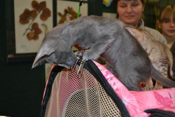 ярмурка кошек в Иркутске