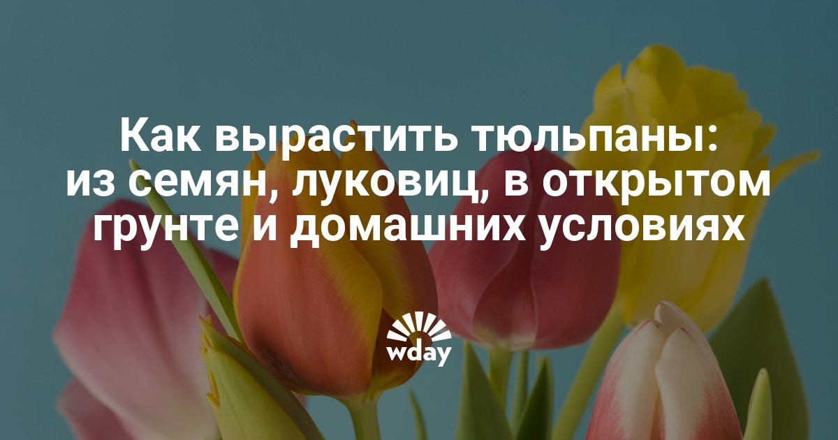 Как сажать семена тюльпанов из китая 54