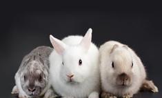 Остров Кроликов стал туристической меккой