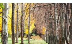 Время желтой листвы: как краснодарские фотографы видят осень