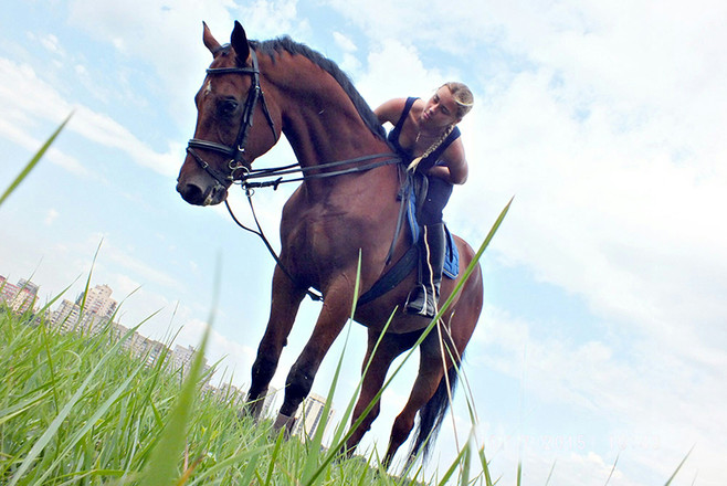 Секс верхом на коне