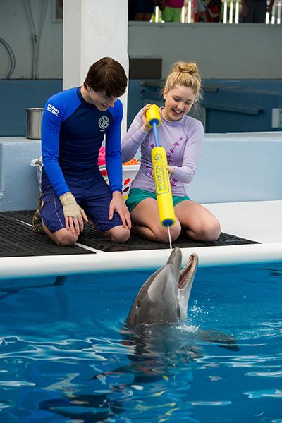Дельфины – друзья людей