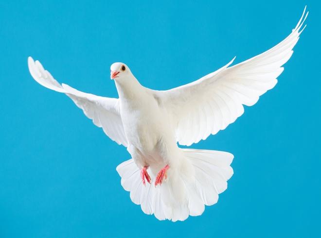 ВБлаговещение волгоградцев приглашают обозначить День птиц