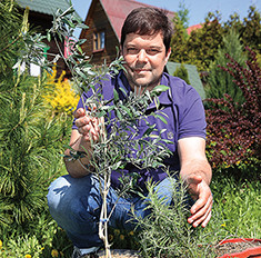 Сергей Бабаев: елочку спас, а в итоге лес вырастил