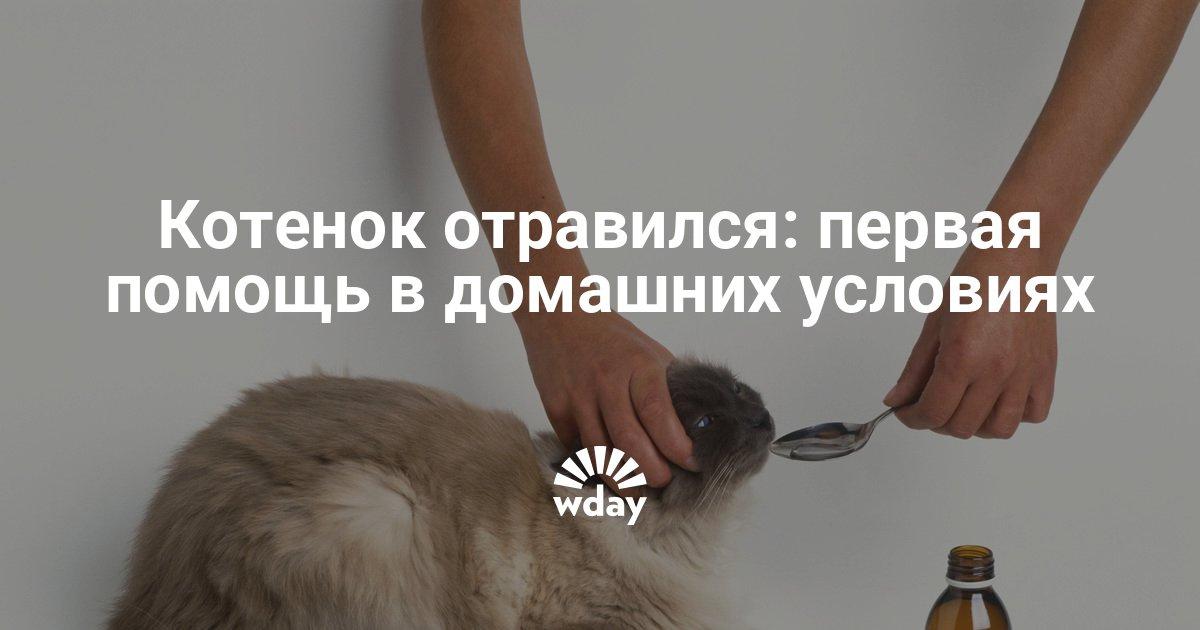 Отравление у котенка лечение в домашних