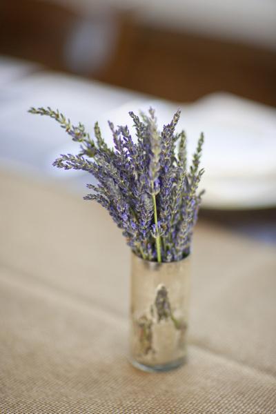 Цветы лаванды фото