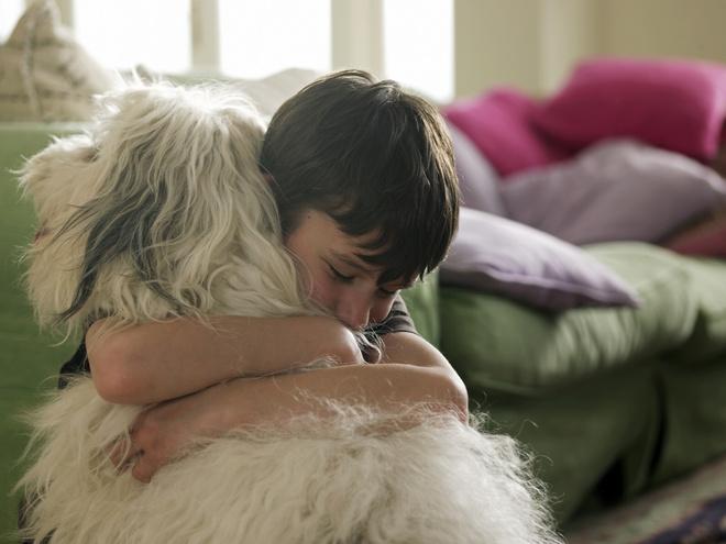 аллергия у ребенка на собаку