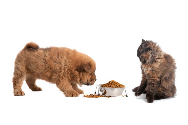 кошачий корм собакам