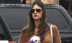 Жертва моды: PETA ополчилось на Алессандру Амброзио
