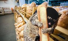 лучшие котожабы третьей мартовской недели