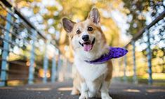 25 самых очаровательных собак Самары. Голосуй!