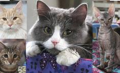 Коты-обаяшки: 7 породистых, один – дворняжка