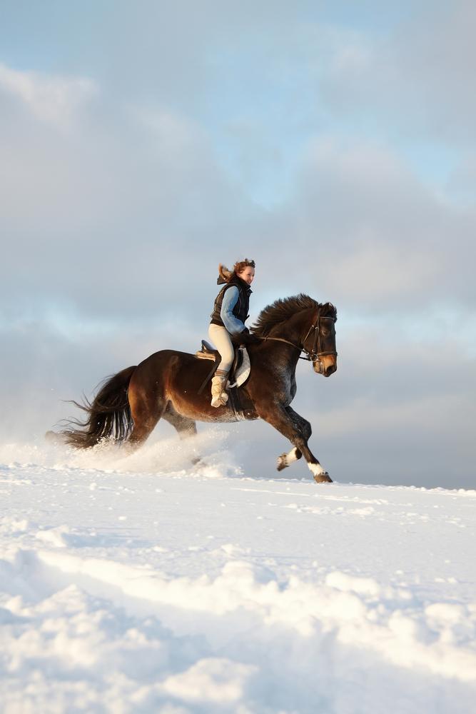 Урок верховой езды