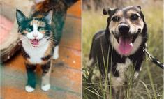 Котопёс недели: кошка Варежка и собака Майя ждут своих людей