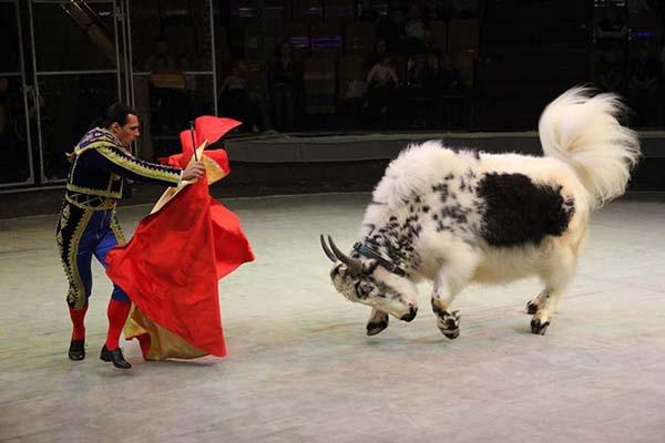 Цирковая программа Мир животных – мир друзей»