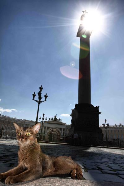 Коты Эрмитажа: фото, день эрмитажного кота 2016